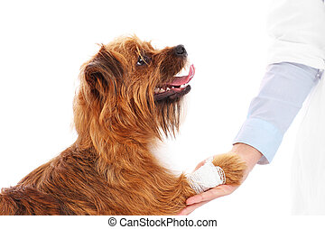 Dog with hurt paw