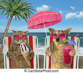Dog with juice and cat with ice cream on loungers