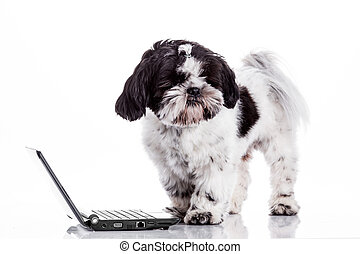 Dog with laptop.