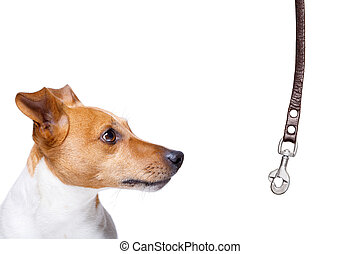 dog with leash waiting for a walk