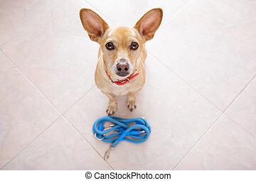dog with leash waits for a walk