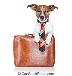 dog with leather bag