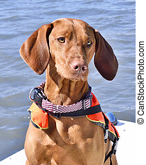 life jacket, dog, nautical vessel, macro, close-up,lake, river, water, pet collar, boat trip, brown dog, nice weather, life west, sky, sun, cute, orange color, brown, selective focus, reed - grass family, sunlight, swamp, wetland, viszla