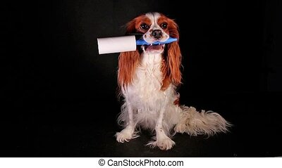 Dog with lint roller to avoid fur shedding.
