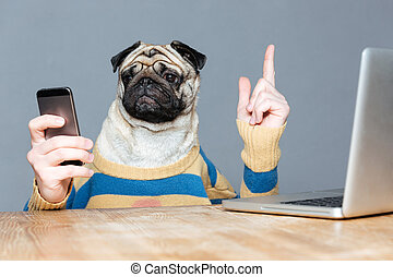 Dog with man hands using mobile phone and pointing up