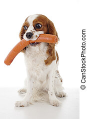Dog with meat treat treats. Sausages. Dog food with cavalier king charles spaniel. Trained pet photo. Animal dog training with food. Cute Spaniel photo for every concept. Hungry dog illustration on isolated white background