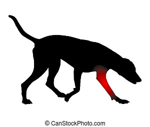 Dog with pain in the foreleg