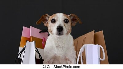 Cute dog with paper bags with purchases sits and looks at the camera on a black background. Black Friday sale