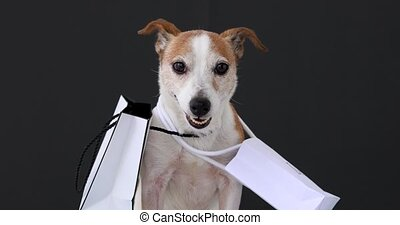 Cute dog with white paper bags with purchases sits and looks at the camera on a black background. Black Friday sale