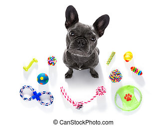dog with pet toys - curious french bulldog dog looking up to...