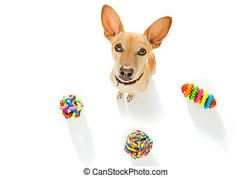 dog with pet toys