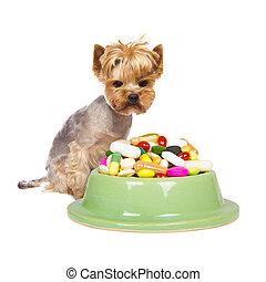 Dog with pills