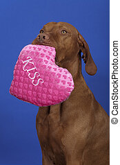 dog with pink pillow
