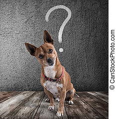 Dog with quizzical expression - Dog with question mark over...