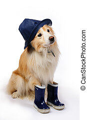 Dog with rain boots and hat