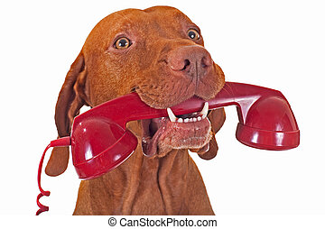 dog with red phone