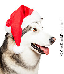 Dog with Santa hat isolated on white