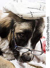 dog with spectacle and cap