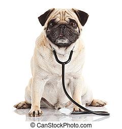 dog with stethoscope.