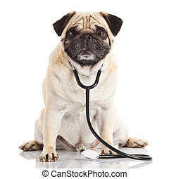 dog with stethoscope.