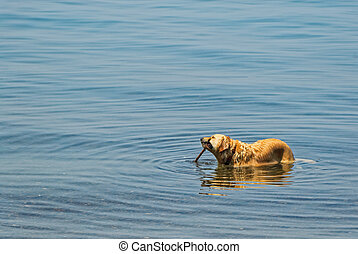 Dog with Stick in Lake