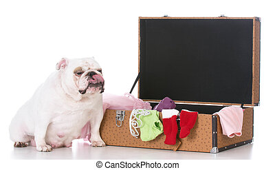 dog with suitcase