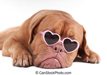 Puppy with heart shaped pink framed glasses
