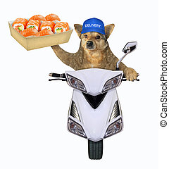 Dog with sushi on the scooter