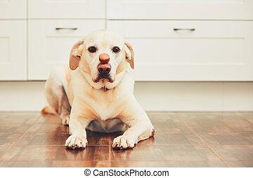 Dog with tasty macaroon