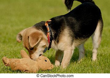 Dog with teddy bear