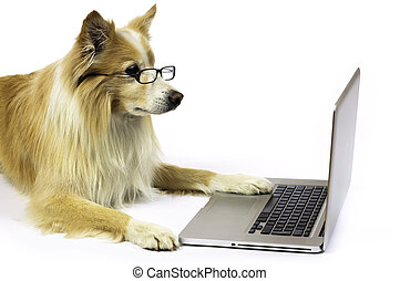Dog working on a laptop