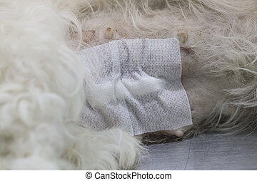 Dog wound after operation