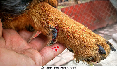 dog wounded paw
