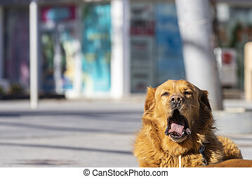 yawning in the street