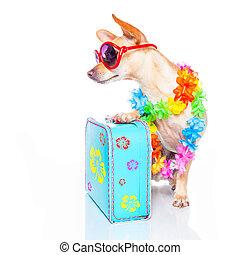 dog, zomervakantie
