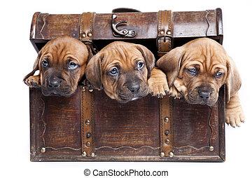 doggy., am besten, friend!, glücklich