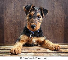doggy, auf, a, kiste