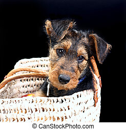 Doggy in a basket