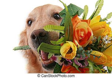 doggy, liebe