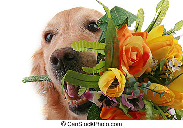 doggy love - golden retriever with bouquet of flower