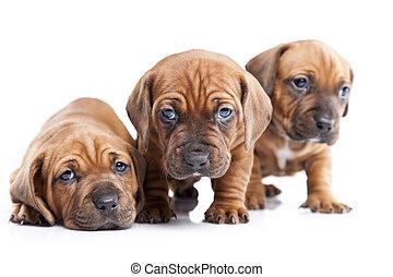 doggy., mieux, friend!, heureux