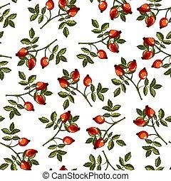 Dogrose foliage and fruits, wild rose eglantine vector - ...