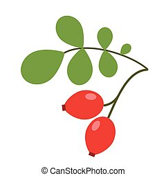 dogrose, plat, baies, simple, illustration
