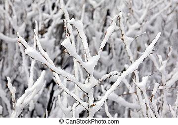 dogrose under a snow