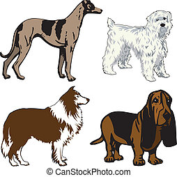 Vector Illustration of 4 different dogs. Dogs2