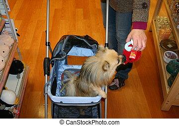 dog\'s, achats
