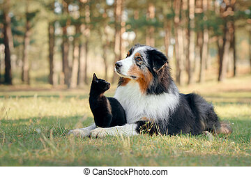dogs and a black cat. Australian Shepherd in nature