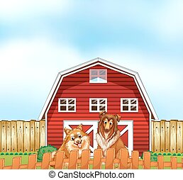 Dogs and barn