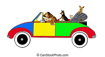 Dogs and cats driving in a car