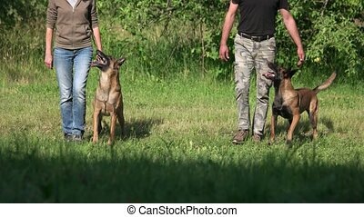 Dogs and humans are synchronously stepping. Two dogs and two humans are synchronously stepping forward.